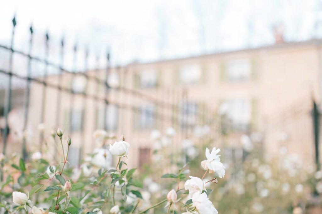 photo de roses au domaine de Vavril dans le beaujolais près de lyon