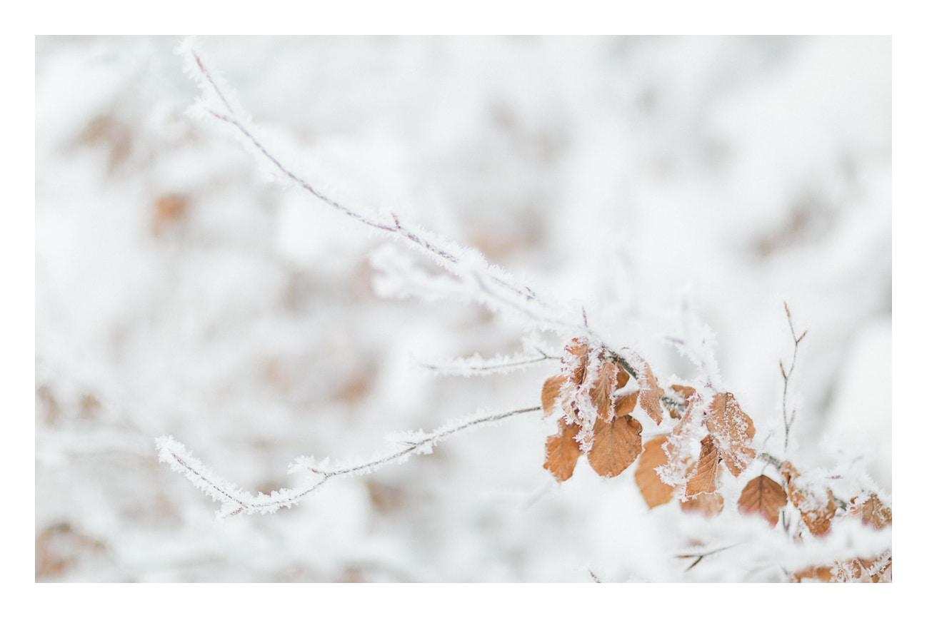photos branche gelé